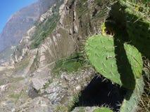 De canion van Colca, Peru Stock Foto