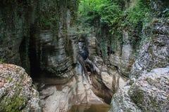 De canion van de bergrivier met Liana en het meest greenforest in de Bergen van de Kaukasus royalty-vrije stock foto's