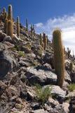 De Canion van de cactus - San Pedro DE Atacama - Chili Stock Afbeeldingen