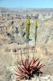 De Canion van de vissenrivier, Namibië Royalty-vrije Stock Foto's
