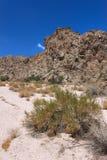 De Canion van de wijnstok - Nevada stock foto