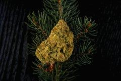 De cannabis droogt knop over de tak van de pijnboomboom - backgro van het Kerstmisthema Royalty-vrije Stock Afbeeldingen