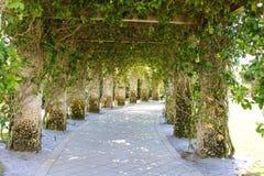 De capricieuze Weg van het Steenlatwerk met het Hangen van Groene Wijnstokken royalty-vrije stock fotografie