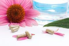 De capsules van Echinacea Royalty-vrije Stock Foto's