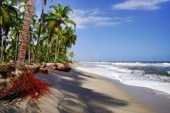 De Caraïbische Zee en één van zijn mooie stranden op Isla Grande, Rosario Archipelago royalty-vrije stock foto's