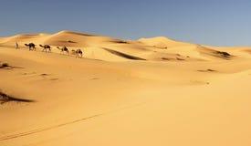 De caravan van de kameel stock fotografie