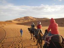 De caravan van de kameel in de woestijn van de Sahara Stock Foto