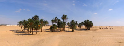 De caravan van de kameel in Tunesië Royalty-vrije Stock Fotografie