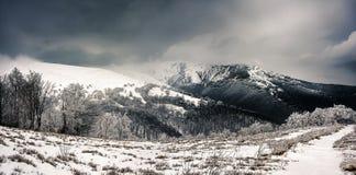 De Carpathian bergen Royaltyfri Fotografi