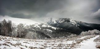 De Carpathian bergen Fotografering för Bildbyråer