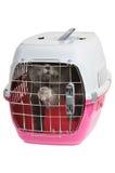 De carrier van het huisdier met kat Stock Foto