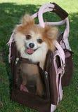 De Carrier van het puppy Royalty-vrije Stock Afbeelding
