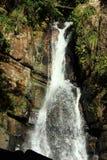 De Cascade van het regenwoud Stock Afbeeldingen