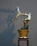 De cascadebonsai van de haagdoorn in de winter Royalty-vrije Stock Afbeelding