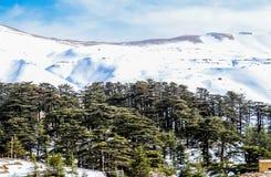 De Ceders in Libanon in de winter van 2018 royalty-vrije stock foto's