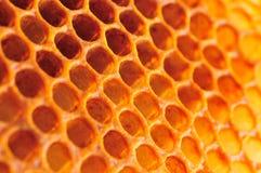 De cel van de honing Stock Foto's
