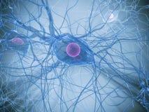 De cel van de zenuw stock illustratie