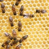 De cellen en de bijen van de honing royalty-vrije stock afbeelding