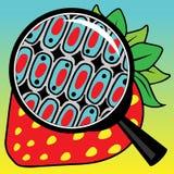De cellen van aardbeien bekeken door meer magnifier Royalty-vrije Stock Afbeeldingen