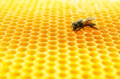 De cellen van de bijenhoning Royalty-vrije Stock Foto's