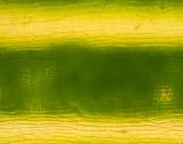 De cellen van de installatie onder microscoop Royalty-vrije Stock Foto's