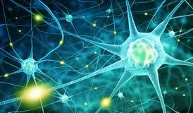 De cellen van de zenuw Stock Afbeeldingen