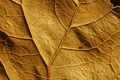 De celstructuur en aders van het de herfstblad Stock Foto