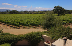 De Centrale Kust van Californië van wijngaarden Stock Fotografie