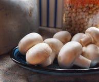 De champignon de couche toujours durée Photo libre de droits