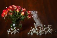 De charmante rat op zijn achterste benen snuift bloemen Bruine achtergrond royalty-vrije stock foto