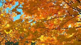 De charme van de gouden herfst stock footage