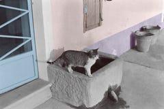 De chat puits dessus photographie stock