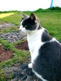 De chaton portrait dehors Photos stock