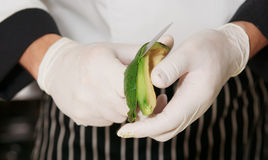 De chef-kok pelt avocado stock afbeelding