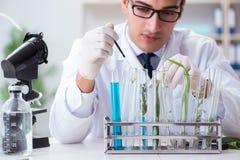 De chemicus die van de biotechnologiewetenschapper in laboratorium werken stock fotografie