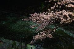 De Chidorigafuchi que vai ver as flores de cerejeira na noite imagens de stock royalty free