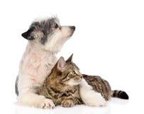 De chien d'embrassement et regard chat loin D'isolement sur le fond blanc Images libres de droits