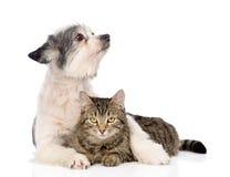 De chien d'embrassement et regard chat loin D'isolement sur le fond blanc Photographie stock libre de droits