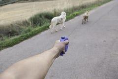 De chiens amis ensemble Photos libres de droits