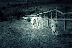 De chiens amis ensemble Image libre de droits