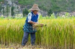 De Chinese landbouwer werkt hard Royalty-vrije Stock Afbeeldingen