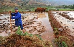 De Chinese landbouwerswerken hard op padieveld Stock Afbeeldingen