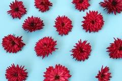 De chrysantenbloemen worden gelegd op de blauwe oppervlakte royalty-vrije stock foto's