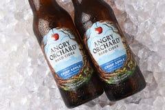 De Cider Kernachtig Apple van de Anrgyboomgaard stock foto's