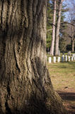 De cimetière dos dedans Photos stock