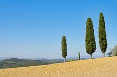 De cipres van Toscanië Royalty-vrije Stock Afbeelding
