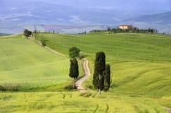 De cipresbomen van Toscanië met spoor Stock Foto's
