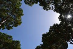 De cirkel van bomen Stock Afbeelding