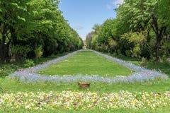 De Cismigiu trädgårdarna (Parcul Cismigiu) i Bucharest Arkivfoto