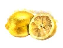 De citroen van de waterverf Stock Foto